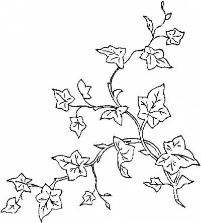 цветы в тюмени