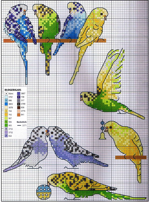 Схема вышивки крестом бесплатно попугаи
